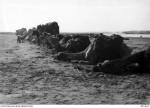 Camel Corps World War 1