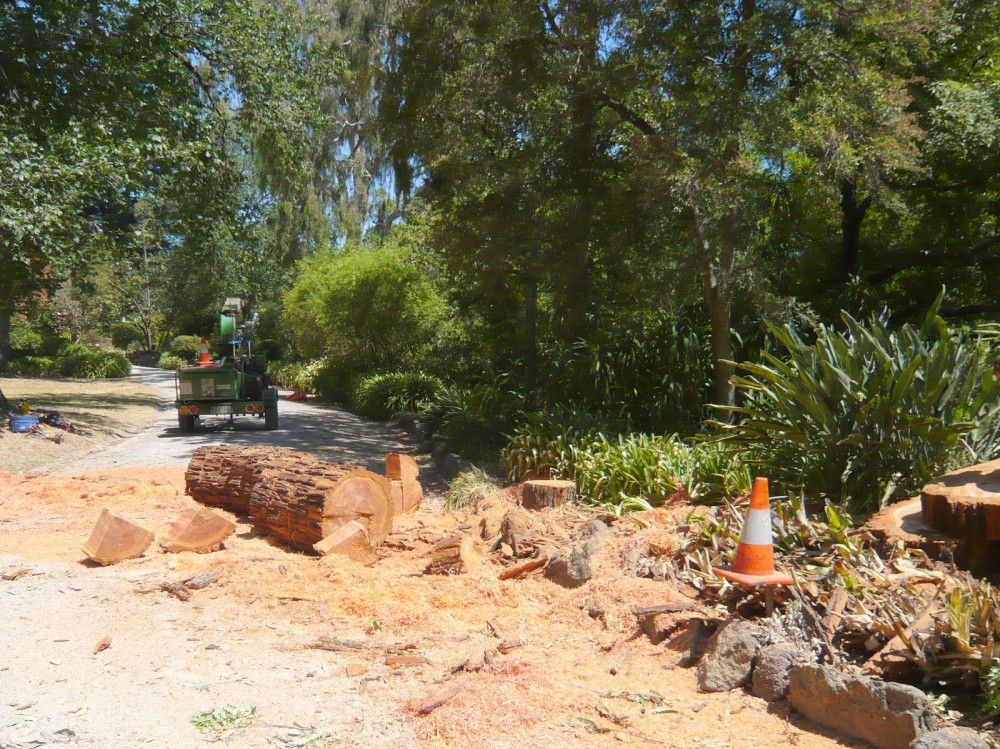 143 Remains of Mahogany Gum 4 February 2009