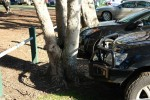 The tree versus the bull bar