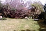 23 1977 Bishopscourt - the kitchen garden
